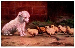 Dog ,  Puppies and Chicks , Just Out