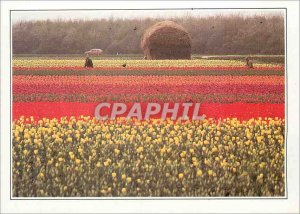 Postcard Modern Nederland Netherlands Flower Fields