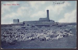 Sugar Factory,Billings,MT Postcard