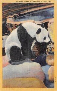 Giant Panda, St Louis Zoo St Louis, MO, USA Bear Unused