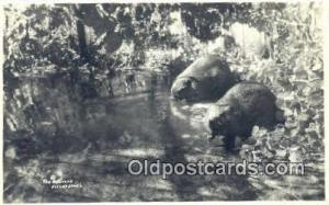 Real Photo - Beavers Bear Postcard,  Bear Post Card Old Vintage Antique  Real...