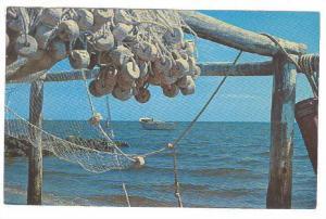 Drying Fishing Nets Along The Coast, South Carolina, 40-60s