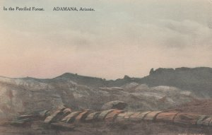 ADAMANA, Arizona, 1920-30s; In the Petrified Forest