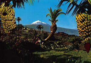 Spain Tenerife Panoramic View of The Teide Mountain Bananas Postcard