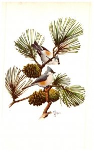 Birds , Tufted Titmouse  , artist signed