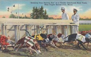 Florida Miami Greyhounds Breaking From The Starting Box West Flagler Kennel Club