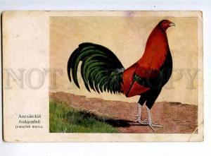 236103 English game-cock Vintage Russian LEVENSON postcard