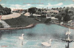 The Park North Shields Lake Swan Birds Promenade