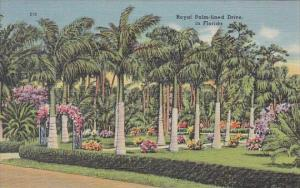 Royal Palm Lined Drive In Florida