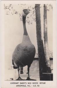 RP: Lockhart Gaddy's Wild Goose Refuge , ANSONVILLE , N.C. , 30-40s