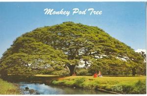 Hawaiian Monkey Pod Tree, Hawaii, unused Postcard