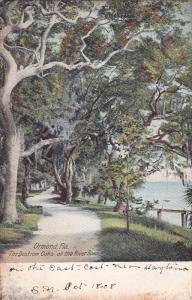 ORMOND , Florida , 1908 ; The Bostrom Oaks on the River Road