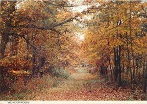 Post card England Twigmoor Woods autumn scenery