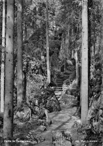 Partie im Zauberwald Ramsau Seeklause