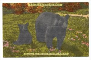 Black Bears,  The Great Smoky Mountains National Park, PU-1960