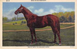 Man O' War, Horse Racing, Trotters,  Postcard Man O'War Unused