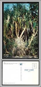 Florida Fort Myers Edison Gardens Screw Pine