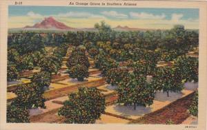 Arizona Trees An Orange Grove In Southern Arizona Curteich