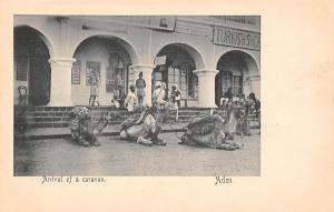 Yemen Aden, Arrival of a caravan, camels, Turkish-Shop
