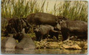 Vintage South Africa Postcard KRUGER NATIONAL PARK Hippos c1940s Dick Wolff