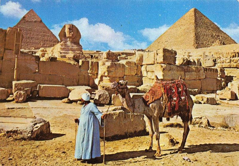 Vintage Postcard, Camel at Giza, The Great Sphinx & Keops Pyramid, Egypt #E