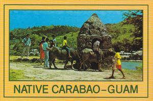Guam Native Carabao Water Buffalo