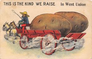 The Kind We Raise in West Union Iowa~Farmer~Exaggerated Potato Wagon Load~1914