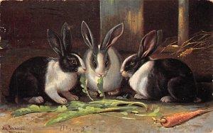 Misc Animals Rabbits 1906