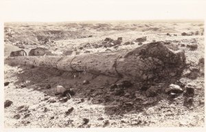 Arizona Petrified Forest Monarch Of The Past Real Photo