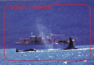 Killer Whales Whale Watching British Columbia Canada