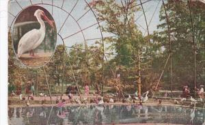 New York City Interior Of Flying Cage New York Zoological Park