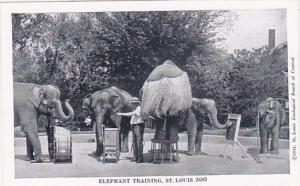 Missouri St Louis Elephant Training St Louis Zoo