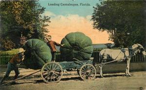 C-1910 Farm Agriculture Exaggeration Postcard 1356 horse drawn 13561 Florda