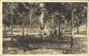 Rubber Plantation Malaya, Malaysia Unused