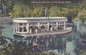 Florida Silver Springs Feeding Fish From Glass Bottom Boat