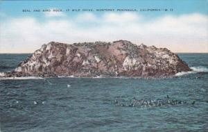 California Monterey Peninsula Seal and Bird Rock 17 Mile Drive