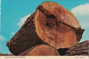 Trees Giant Logs Pacific Northwest Toothpicks
