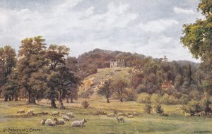 GUILDFORD, Surrey, England, 1900-1910s; St. Catherine's Chapel, Sheep