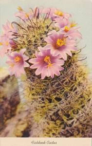 Fishhook Cactus Blossom