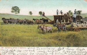 Harvesting Wheat in California , 1907