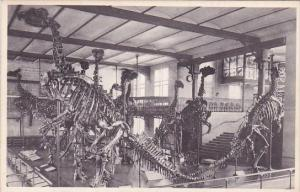 Belgium Brussells Bruxelles Musee Royal D Histoire Naturelle Galeries Nationa...