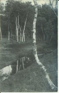 Forest Scenery, Birch Trees By a Stream, Rotograph