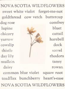 Nova Scotia Wildflower [Real] Attached to postcard , 1980 ; Chickweed