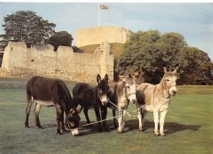 Carisbrooke Castle, The Donkeys with Keep Chateau Isle of Wight