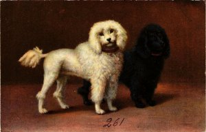 PC CPA DOGS, A WHITE AND A BLACK POODLE, VINTAGE POSTCARD (b3562)