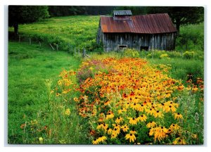 Postcard Wildflowers Black-Eyed Susan & Typical New England Sugarhouse NES41A K3