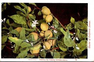 California Cluster Of California Lemons