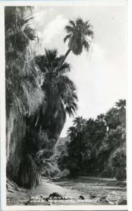 CA - Near Indio, Palm Canyon    *RPPC