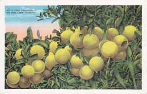 Fifty Two Grapefruit on One Limb FL, Florida - Nice poem on back - WB