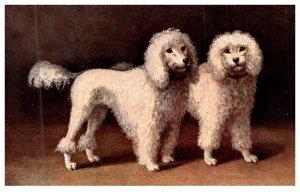 Dog , Poodles